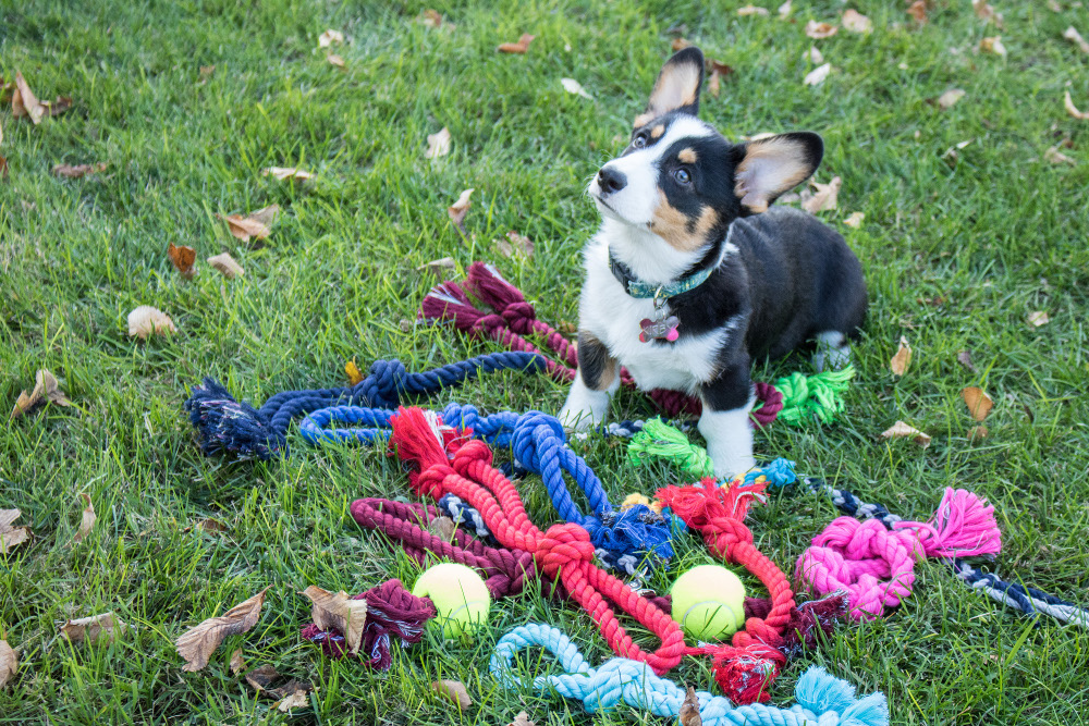Twisted Cotton Rope Dog Toys