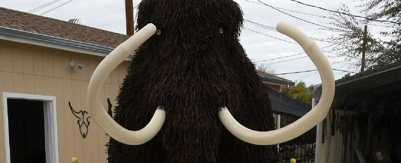 Front view of mammoth
